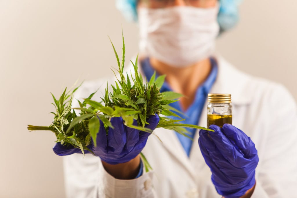 Scientist holding cannabis plant and cannabis extract with gloves.